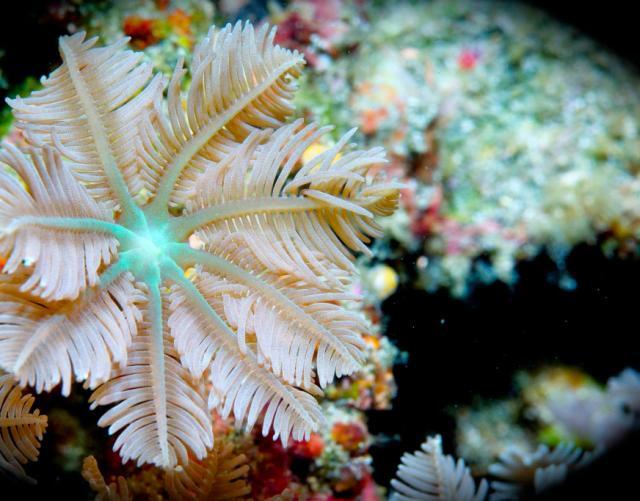 此处需划重点!海洋生物的那些破事儿!