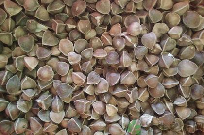 辣木籽的功效及吃法,辣木籽适合什么人群吃