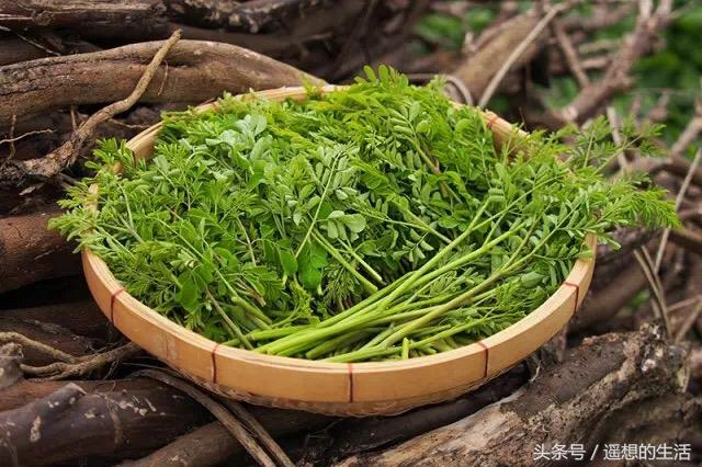辣木籽的吃法,长蔬菜的树——辣木苗,附上经典做法