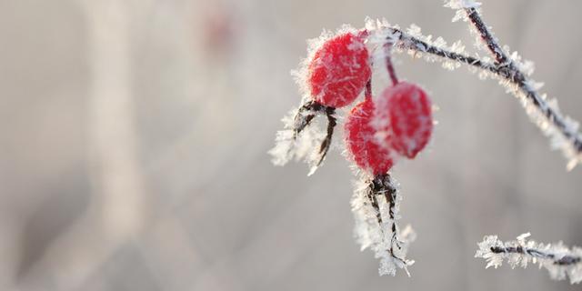 冬天的句子短句唯美,写冬日暖阳舒适的句子 最唯美不过午后阳光正温暖