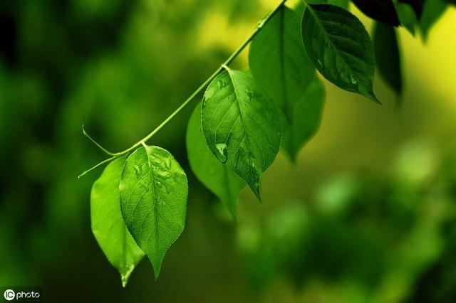 有教育意义的故事,心理故事:一片叶子拯救了一个生命……很有教育意义,值得一看