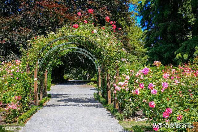 花园的诗,春天送你一首诗:春天的花园