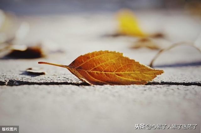 珍惜彼此感情的句子,人生感悟的句子,值得珍惜的情缘