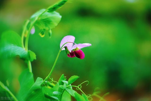 中国花卉,我国历史悠久的名花,你觉得哪个最好看?