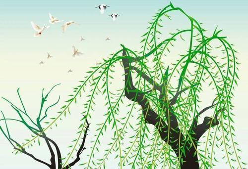 柳树的寓意,杨枝净水遍洒三千,柳叶柳絮意蕴万千