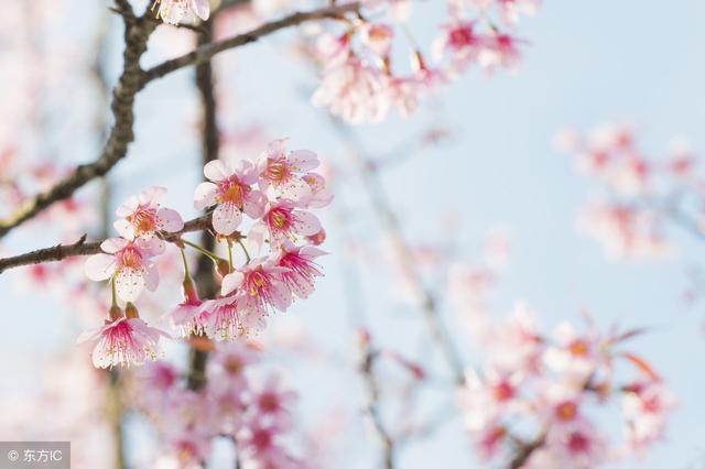 描写春天的古诗有哪些,世界如此美妙,我用50首诗词,带你看尽整个春天