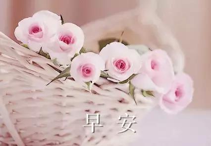 祝福新人的唯美句子,早晨唯美祝福语 早上好的说说句子
