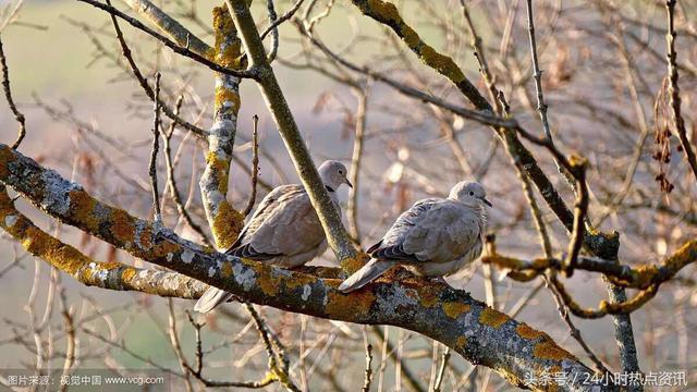 鸟的诗,「签约诗人作品选登」咏鸟组诗(选七首)文/飞刀