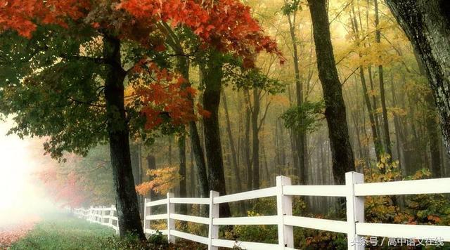 秋天的好句子,描写秋天的好词好句好诗整理,写作时用上更添意境