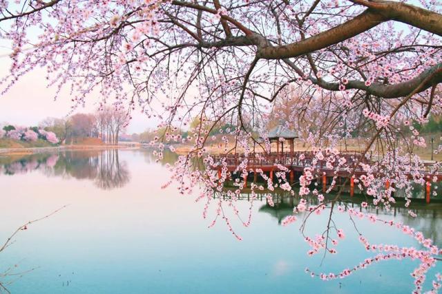 花瓣的诗,三月到,百花开!吟一首诗词,赏一树花开