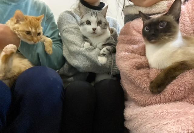 發現一隻斷尾橘貓,它渴望被愛,但又怕被傷害的樣子,太讓人心疼 家有萌寵 第10张