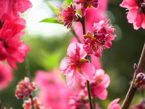 描写春天的优美句子,精美散文:春天的美