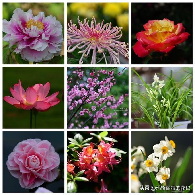 花卉图片及名称大全,历史悠久的十大名花(海量美图),你选哪个做国花?