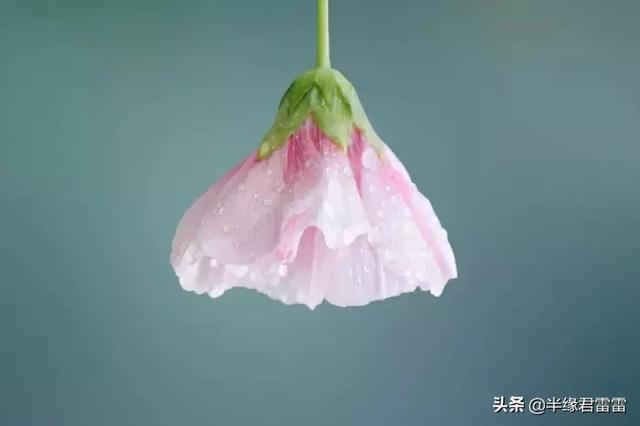 花的寄语短句,掬水月在手,弄花香满衣:50句超唯美的宝藏短句,看一眼就爱上
