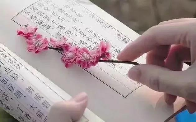 一句简短的风景句子,散文:人生旅途,总在春天遇见美好