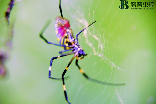 蜘蛛的寓意,蜘蛛的益处与害处