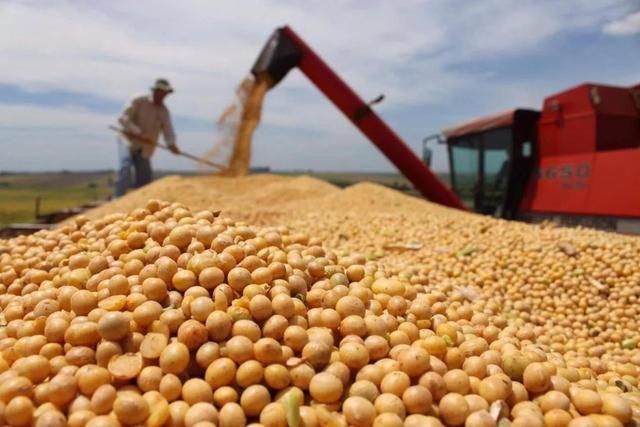 英国又为何变成黄豆的较大输出国?