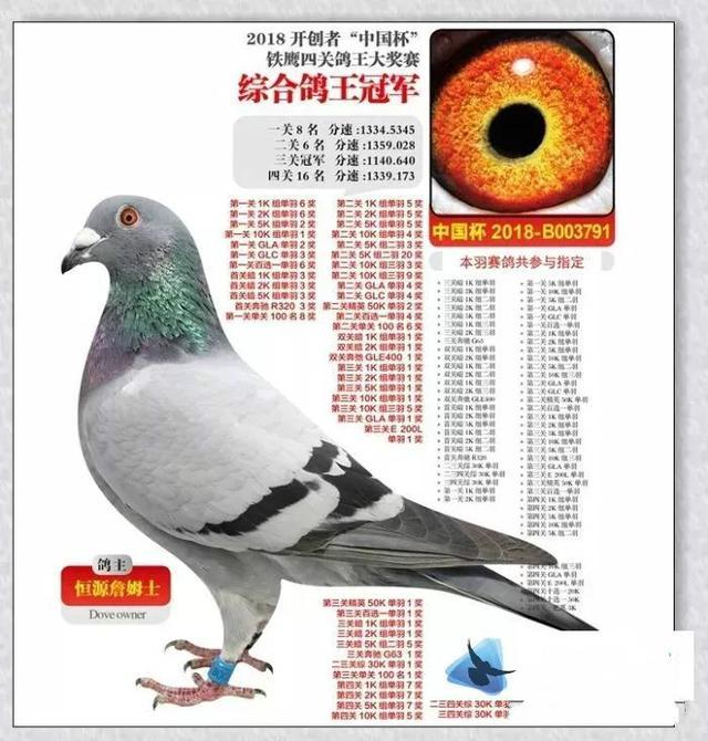 信鸽足环查询查成绩,价值2200万!被认为中国最贵的鸽子,到底有多豪横