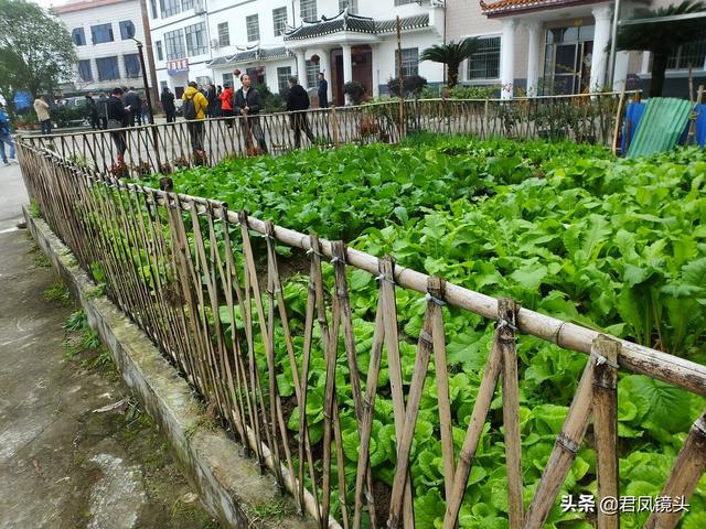 菜园图片,湖北宜昌:农民采用竹篱笆做菜园花坛围栏,成为养眼乡村美景