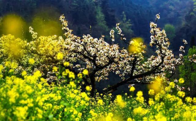 春分的诗,今日春分丨春分至,万物生,愿君莫负好时光!