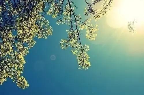 像的句子,很现实的人生句子:人生就像蒲公英,看似自由,却身不由己