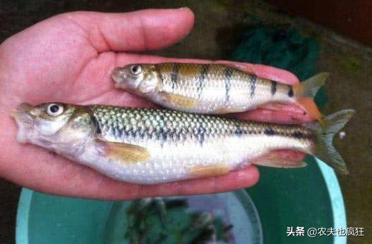 """石斑鱼图片,俗称""""石斑鱼"""",3年长不到1两,肉鲜美鱼卵却有毒,1斤卖近100元"""