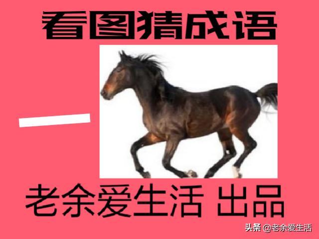 马字成语,晚上好!骏马奔驰保边疆!一组关于马的成语,祝你马到成功