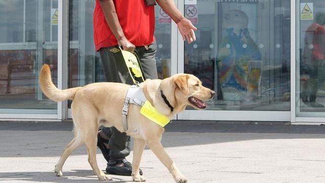 猎狗品种,哪些狗可以当导盲犬?导盲犬犬种列表一览