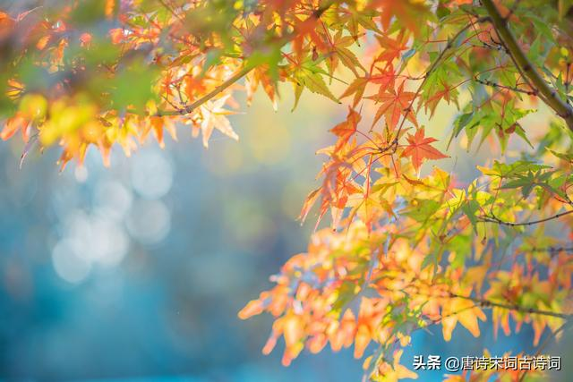 关于秋天的诗,唐诗中描写秋天的诗句,你都知道么