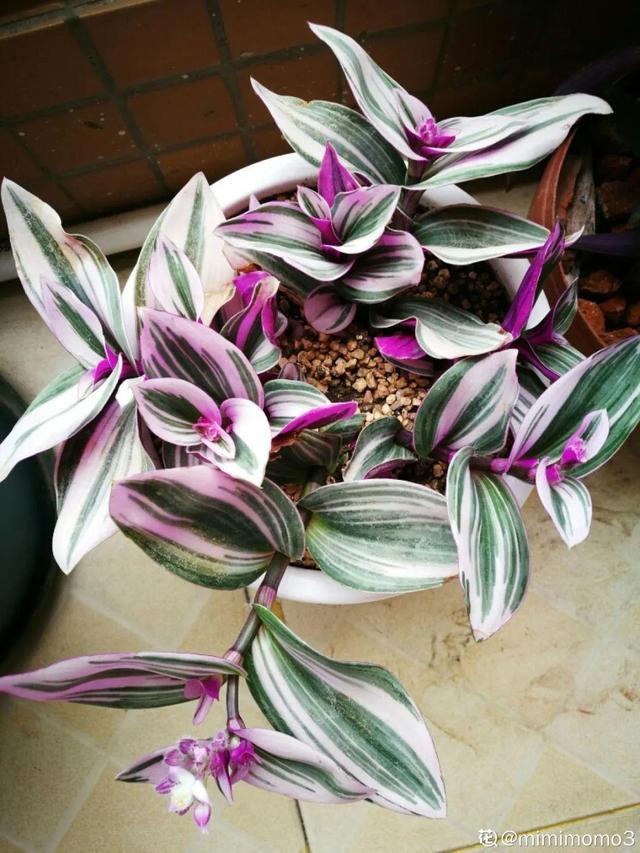 吊兰品种,10种吊兰,耐阴又好看,叶子美得像一幅画
