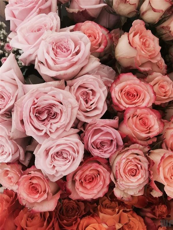 爱情宣言短句,非常有哲理的爱情句子,直指人心,哪一句说中你的心情