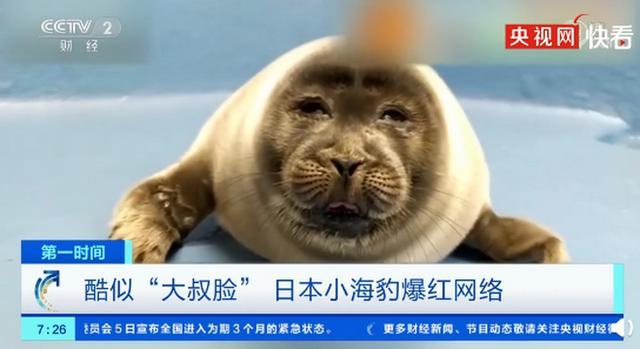 微笑狗图片,日本小海豹酷似大叔脸爆红,被网友取名为微笑君