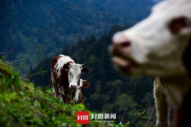 """牛的图片,牛年大吉 一组""""牛""""片送给你 图集"""