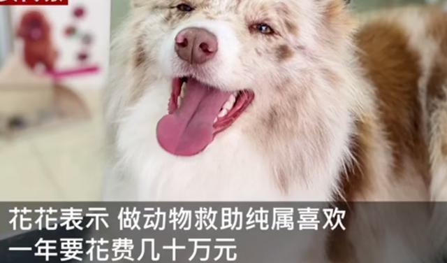 主人醉倒路边宠物狗忠心死守身旁!连声吼叫求救,路人却反被吓跑 全球新闻风头榜 第9张
