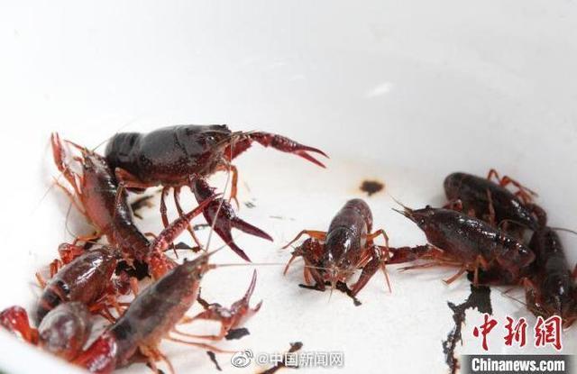 长江下游关键海域推行十年禁渔