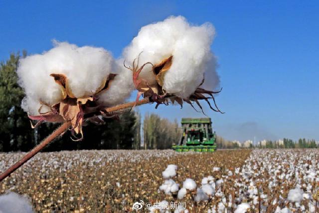 你知道吗?分享一个知识点:人民币是棉花做的 全球新闻风头榜 第1张