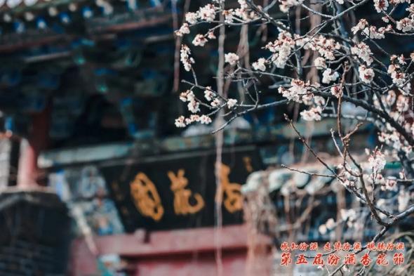 传统节日,感受传统文化深厚底蕴 第五届汾酒杏花节开幕