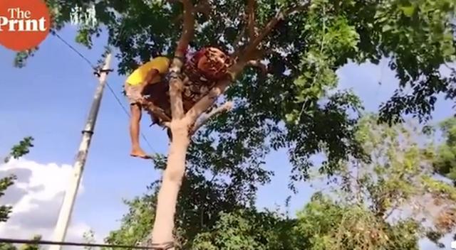 新冠检测呈阳性,印度一男子在树上隔离11天,还并非他一人…… 全球新闻风头榜 第1张