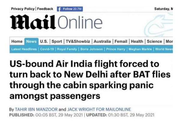 机舱内发现活蝙蝠,印航一飞往美国客机紧急返航新德里 全球新闻风头榜 第1张