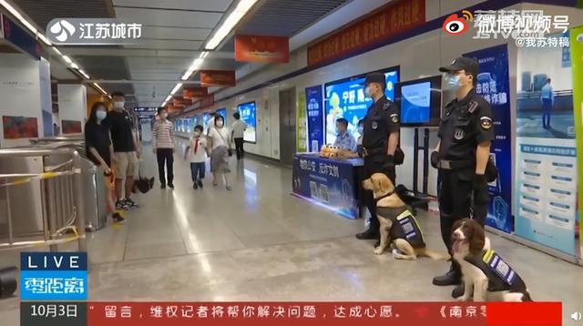 下载反诈APP就能撸南京网红警犬,狗狗:我为工作付出了太多
