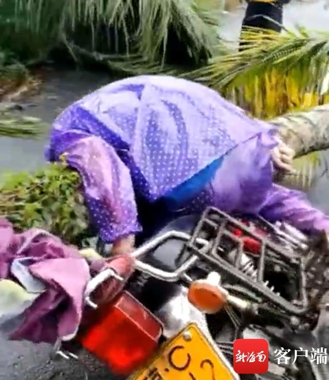 """台风""""圆规""""袭击海南,一男子被椰子树砸中身亡 全球新闻风头榜 第1张"""