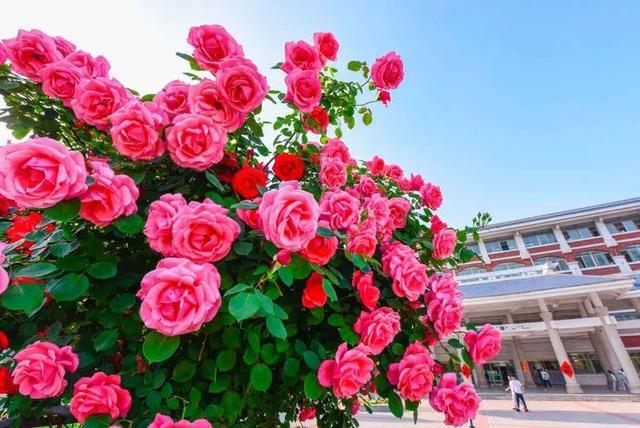 枣庄市实验学校举行名师大家进校园孙飞校长初中语文教学观摩活动