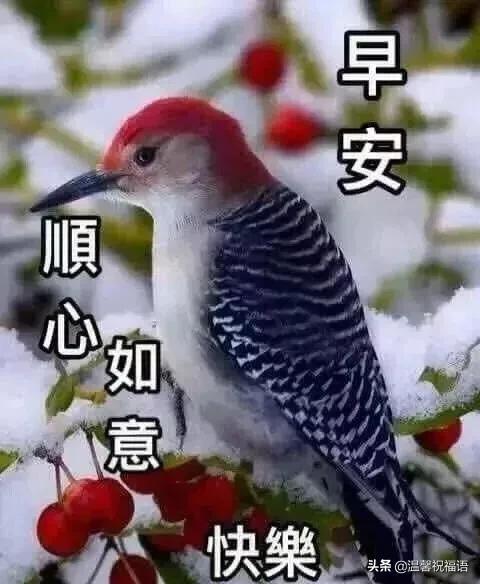 祝福的短句子,温馨问候祝福图片/表情句子,让美丽心情展翅飞翔。早安