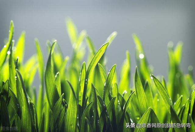 小学生谜语,搞笑谜语:草上结满金银果,太阳出来它就躲(打一自然物)