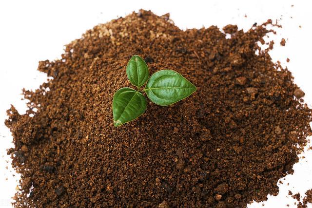 植树节的意义,植树节 生活与自然共呼吸