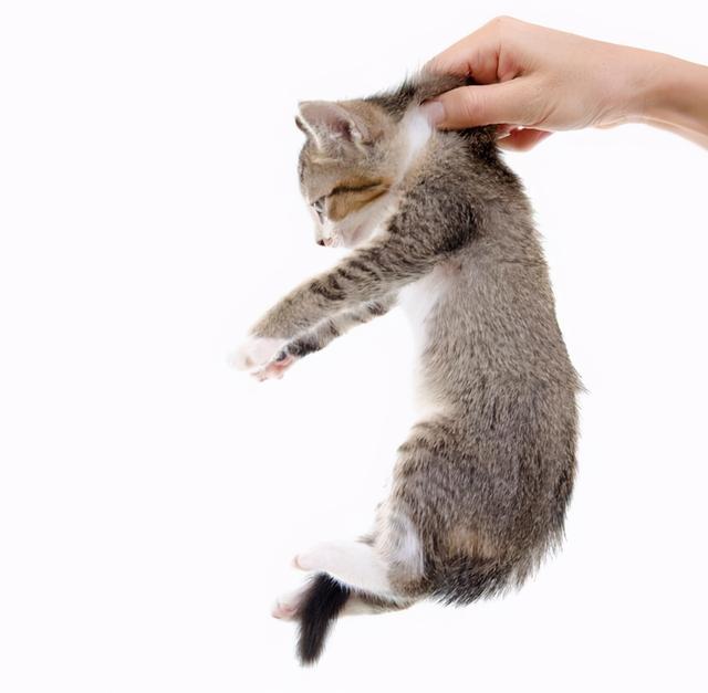 你真的會抱貓嗎?5種常見的抱貓姿勢,但3種都是錯的 家有萌寵 第2张