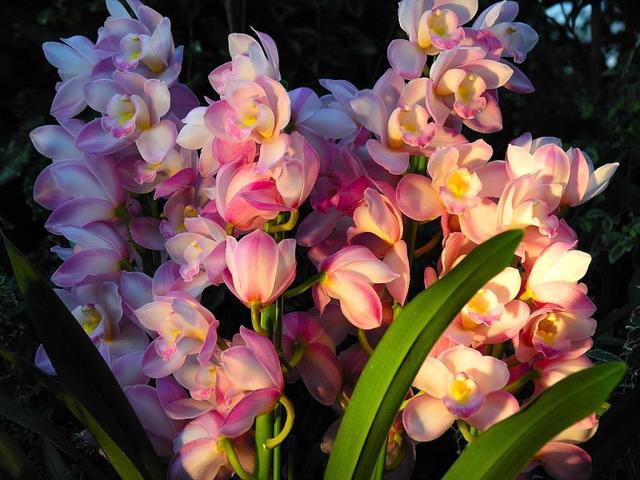中国花卉,「转载」精美花卉图组《中国十大名花》