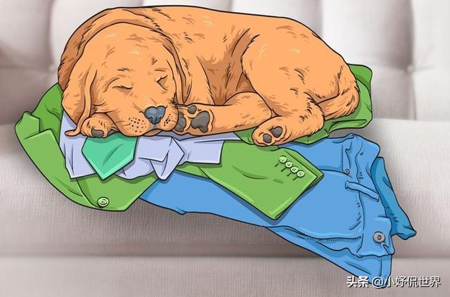 狗的寓意,狗狗的7种怪异行为可能表明的含义