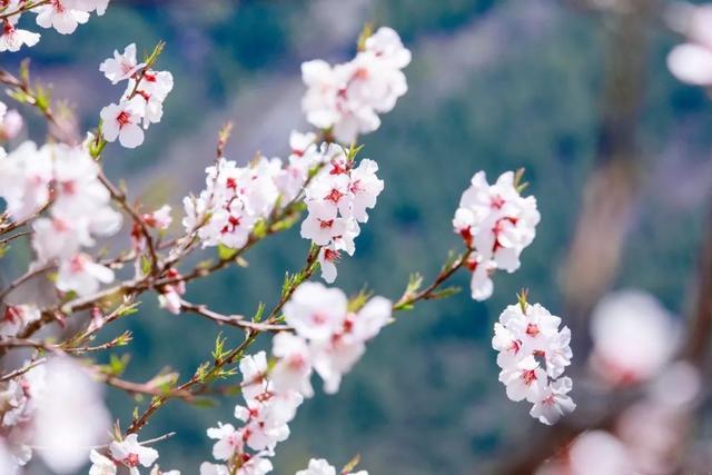 带春的成语,26个春天的成语,原来都出自诗词