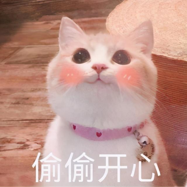 """猫咪品种,""""最容易饲养""""的5种猫,挑选猫咪首选它们"""